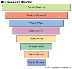 animal classifications and taxonomy chart